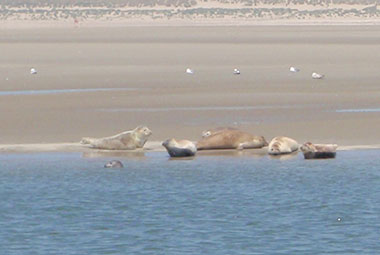 Zeehonden 1